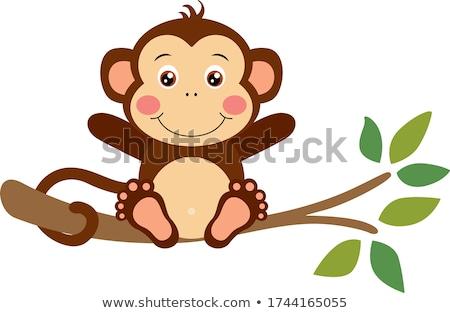 Little monkey  stock photo © Twinkieartcat