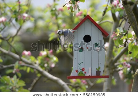 鳥 ボックス 木の幹 環境 保護 巣 ストックフォト © brm1949