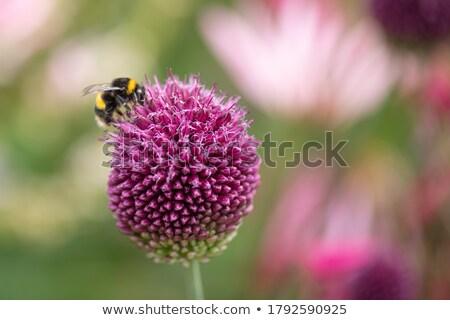 Arılar çiçek çiçekler açmak yeşil başlatmak Stok fotoğraf © meinzahn