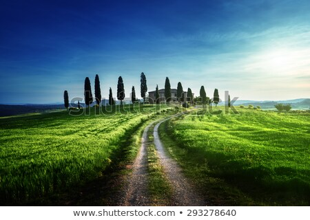 CCypress tree and field road in Tuscany, Italy at sunset. Val d'Orcia Stock photo © photocreo