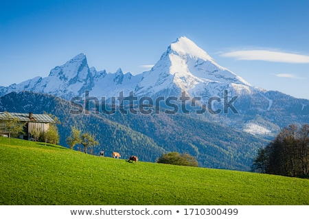 Alpes panorama prado montanhas Alemanha casa Foto stock © MichaelVorobiev
