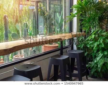 соснового · деревья · дорога · мох · весны - Сток-фото © franky242