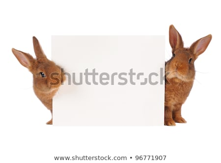 Easter Background with Two Brown Bunnies Stock photo © derocz