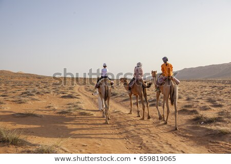 children and camels in the desert stock photo © bluering