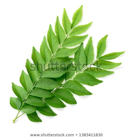 Green curry leaves  Stock photo © szefei