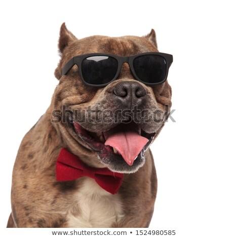 Feliz caballero americano lengua Foto stock © feedough