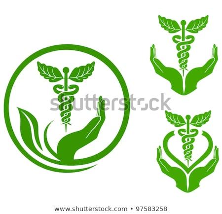 Zdjęcia stock: Bio · roślin · herb · zdrowia · eco · wektora