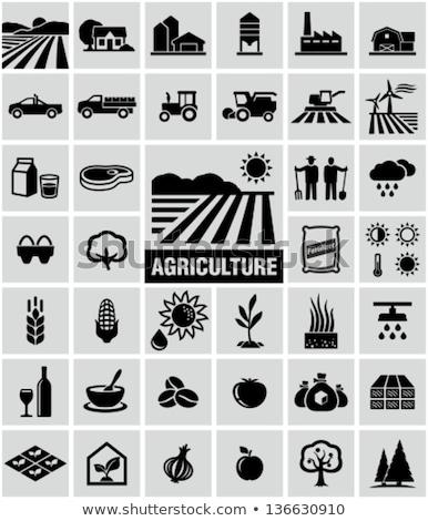 Campo girassóis homem trator agrícola Foto stock © robuart
