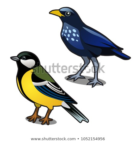 Bird blue tit and jackdaw isolated on white background. Vector cartoon close-up illustration. Stock photo © Lady-Luck
