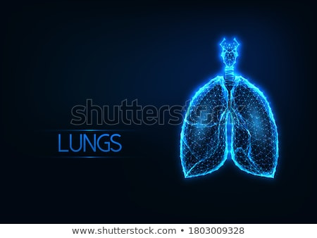 Glow Healthy Lungs, Human Respiratory System Stock photo © lissantee