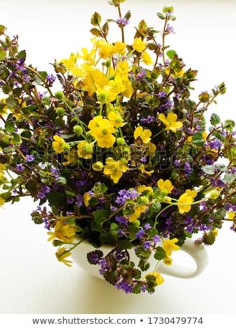 Ragwort and dog mint flowers Stock photo © AGfoto