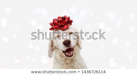 present on head stock photo © zastavkin