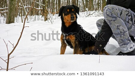 huntsman posing with dog outdoors Stock photo © photography33
