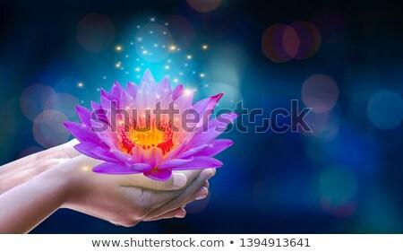 Women hand holding lotus flower background Stock photo © cienpies
