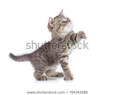 孤立した · 子猫 · ペット · かわいい · 誰も · 小 - ストックフォト © mikdam