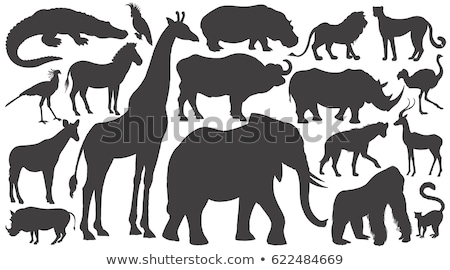 silhouette of african buffalo Stock photo © perysty