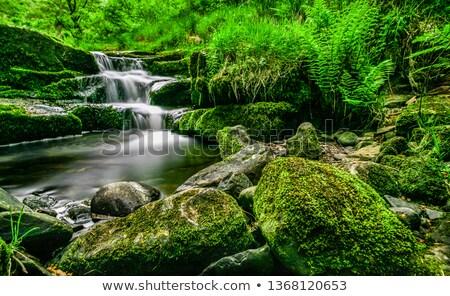 小 カスケード 自然 夏 石 背景 ストックフォト © prill