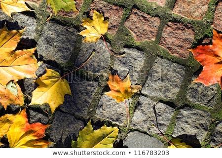 листва тротуар забор трава оранжевый Сток-фото © haraldmuc
