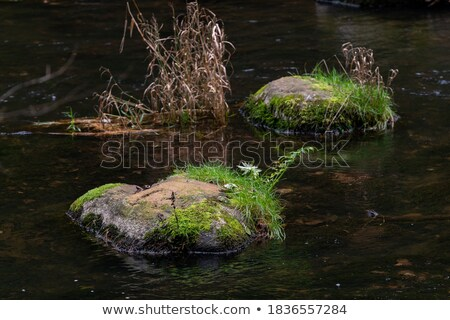 some grasses flowing in water Stock photo © leungchopan