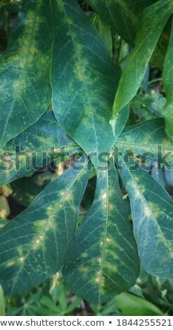 黄色 緑 工場 葉 クローズアップ 低木 ストックフォト © stocker