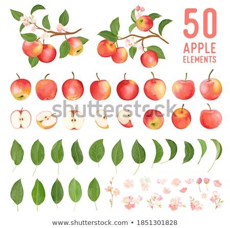 весны · яблоневый · сад · яблоко · деревья - Сток-фото © sailorr