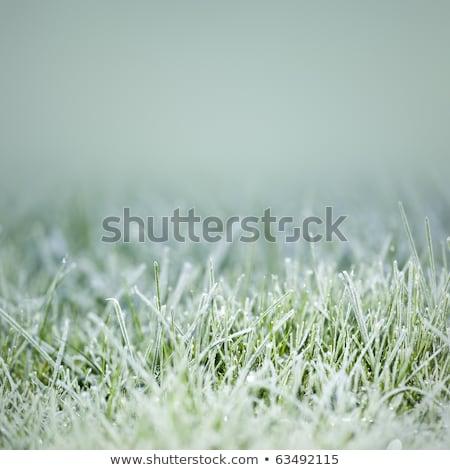 ледяной трава фото зима природы воды Сток-фото © FotoVika
