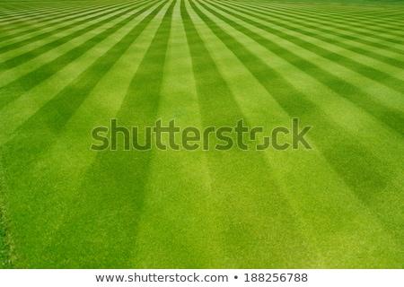 Csíkos fű baseball pálya háttér nyár zöld Stock fotó © njnightsky