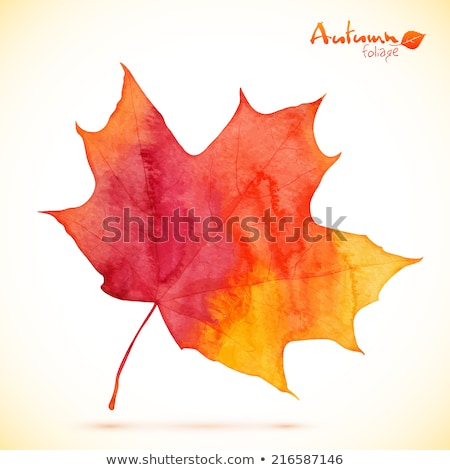 orange watercolor painted vector autumn maple leaf background stock photo © gladiolus