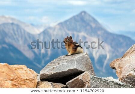 地上 リス ショット 湖 堆石 公園 ストックフォト © ca2hill