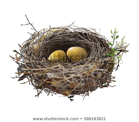 экономия гнезда безопасного инвестиции финансовых группа Сток-фото © Lightsource