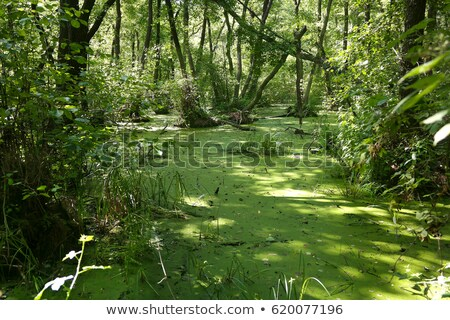 zöld · mocsár · Belgrád · víz · fák · folyó - stock fotó © epstock