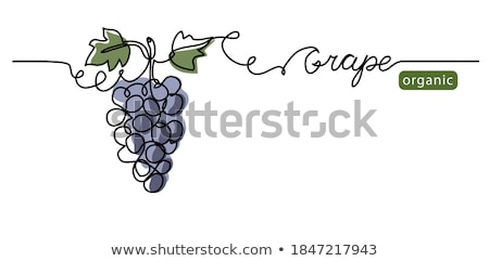 Single bunch of grapes  Stock photo © mady70