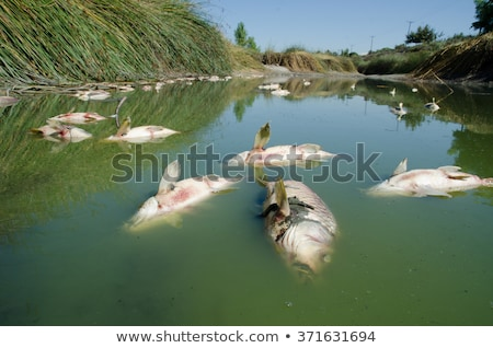 Morto peixe praia lago rei entrada Foto stock © dirkr