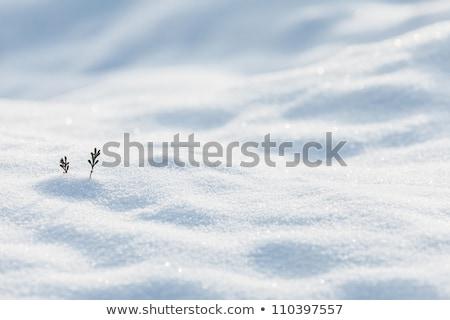 Piccolo ramoscello neve bianco inverno texture Foto d'archivio © Juhku