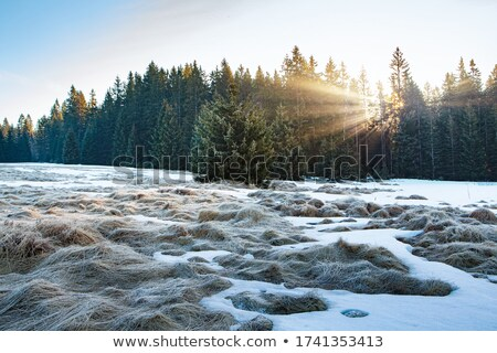 Winter landscape with rising sun Stock photo © Kotenko