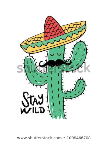 Kaktusz kalap vicces kék szombréró utazás Stock fotó © ivonnewierink