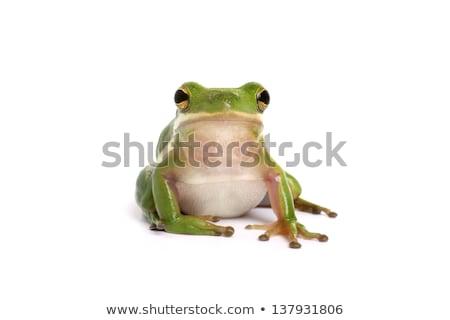 kurbağa · bahçe · gölet - stok fotoğraf © klinker