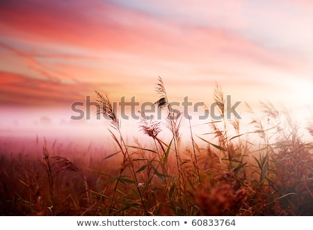Beautiful landscape with dawn mist and morning dew Stock photo © TasiPas