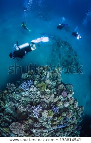 jelenet · vízalatti · illusztráció · hal · természet · háttér - stock fotó © bluering