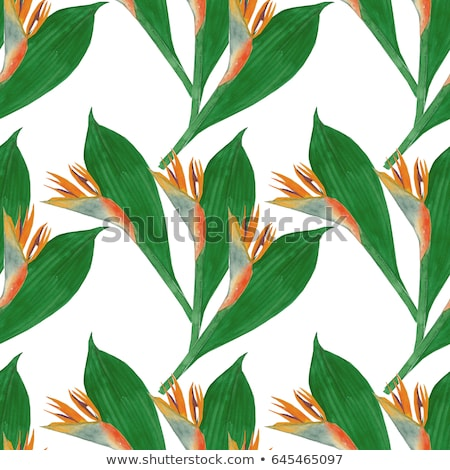 watercolor tropical leaves isolated on white background vector illustration stock photo © mamziolzi