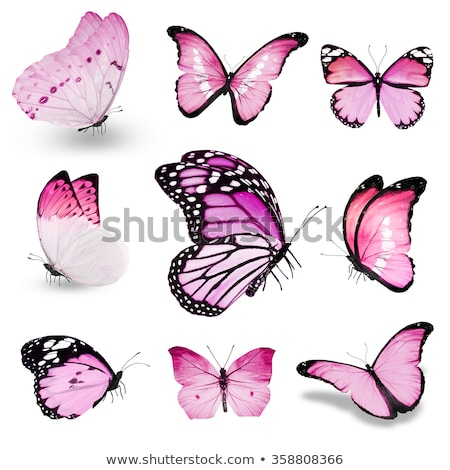 9 differences butterfly stock photo © olena