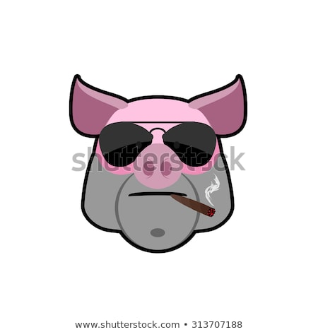 Angry boar. Pig head with glasses and a cigarette. Animal farm i Stock photo © popaukropa