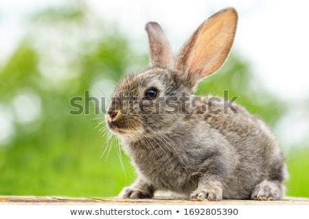 Cute weinig konijn geïsoleerd witte Pasen Stockfoto © bedlovskaya