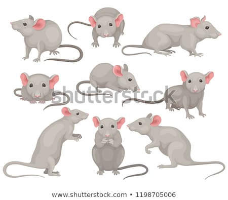animal set portrait in flat graphics   mouse stock photo © foxysgraphic