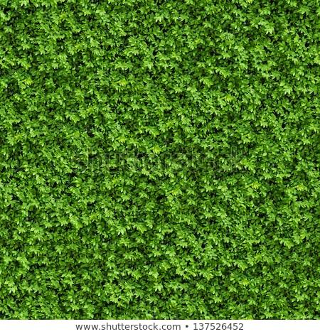 Green Grass. Seamless Tileable Texture. Stock photo © tashatuvango