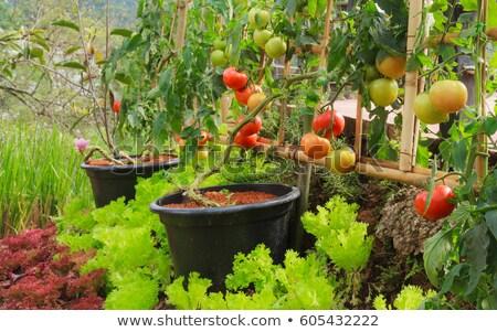 成長 · イタリア語 · 春 · 手 · 自然 - ストックフォト © virgin