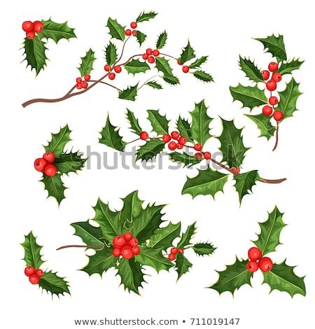 Maretak witte christmas vakantie symbool witte achtergrond Stockfoto © monkey_business