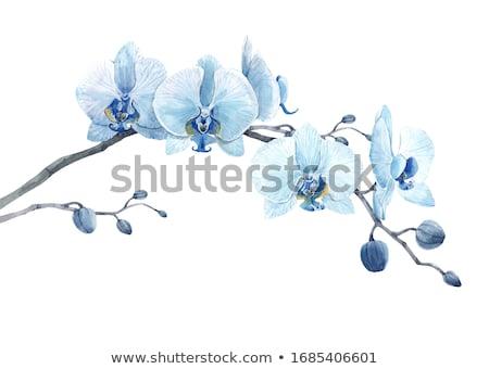 Akwarela niebieski kwiat odizolowany biały wektora format Zdjęcia stock © balasoiu