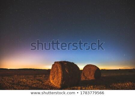 Nyár mezők zöld legelő égbolt fű Stock fotó © wildman