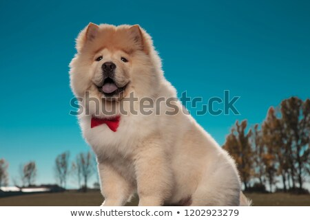 Boldog szőrös kicsi kutyakölyök kutya visel Stock fotó © feedough